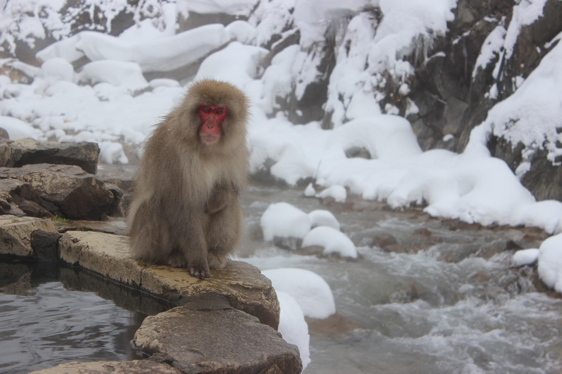 冬の露天風呂(サル)